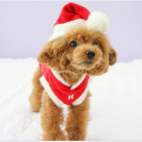 리얼펫 크리스마스 강아지 산타 모자
