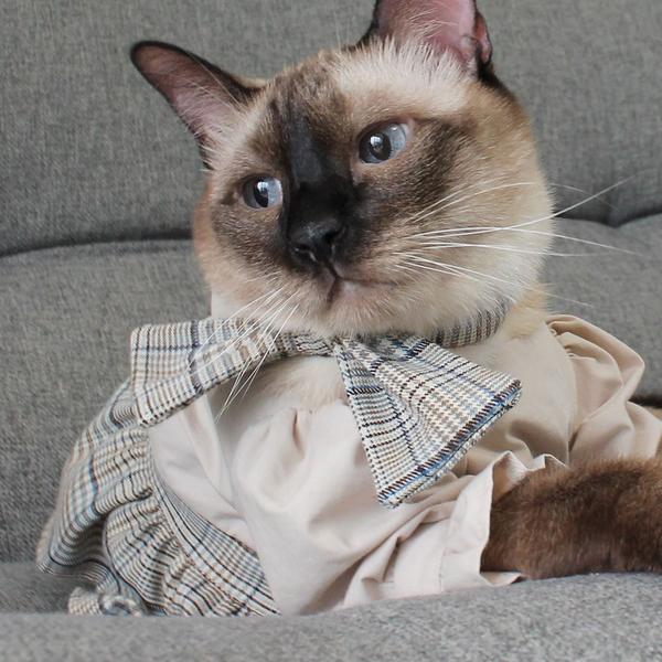 몽페레 고양이 몽마르뜨 체크스카프 로얄 밀크티