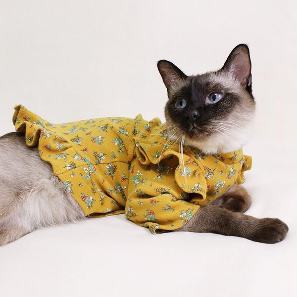 몽페레 고양이 로망스가든 탑 옐로우가든