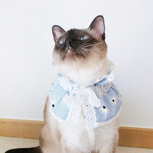 몽페레 고양이 끌레망뜨 케이프 퓨어 블루