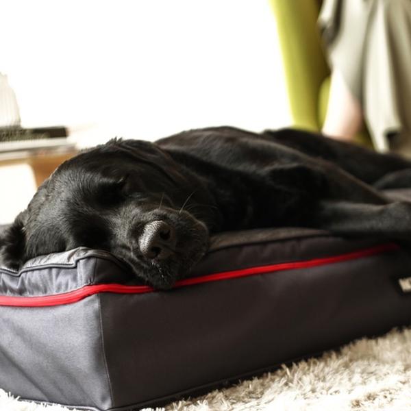 나우위 인디 2중 반려동물 침대매트 S