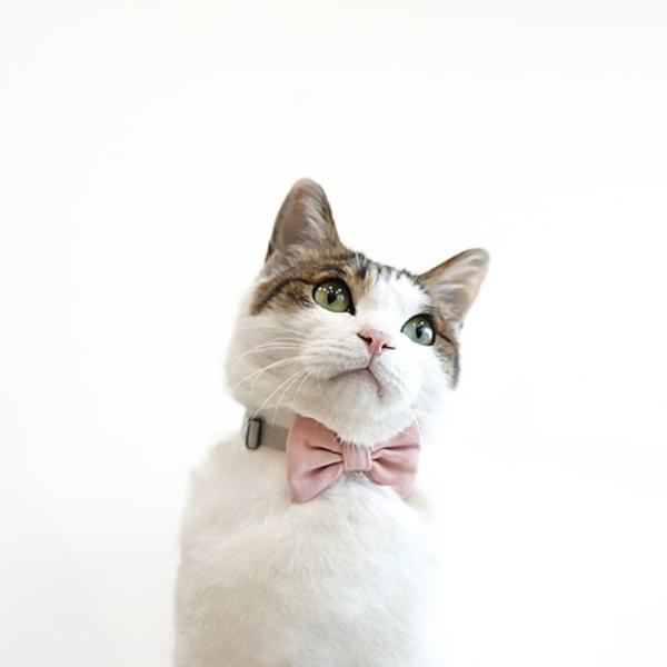 패리스독 고양이 목줄 보타이