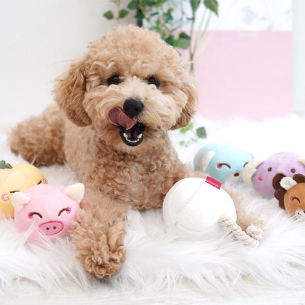 패리스독 애견 장난감 말랑 잼잼토이 (랜덤발송)