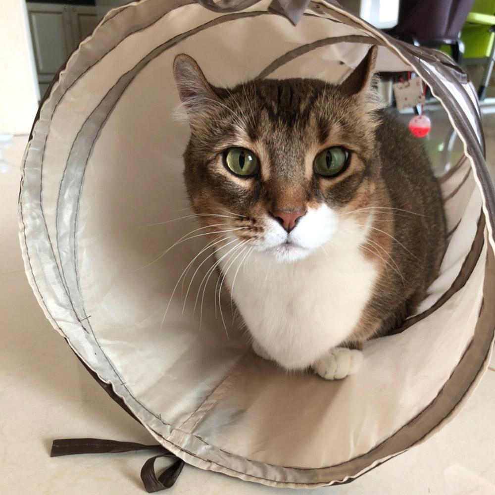발라당 고양이 바스락 캣터널