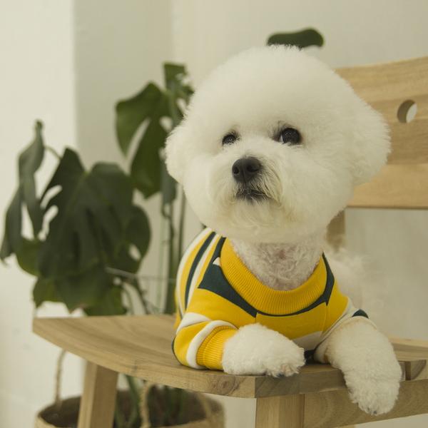 데일리 강아지 맨투맨 옐로우