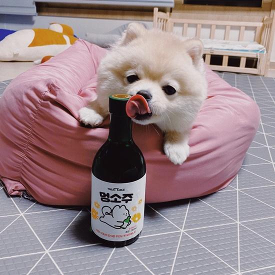 멍소주 330ml 강아지 전용 무알콜 소주 음료