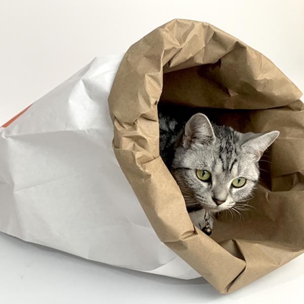 쥬아펫 고양이 숨숨집 금붕어 하우스