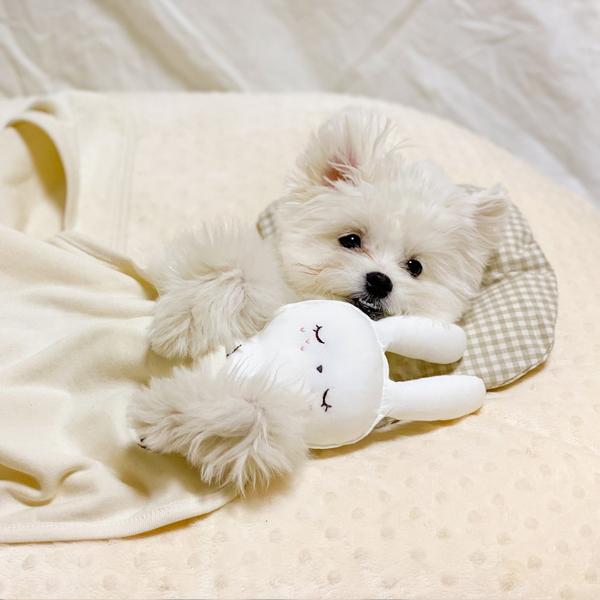 개달당 잠자는 숲속의 달당냥 강아지 애착인형 삑삑이 장난감