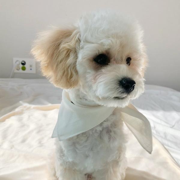개달당 강아지 오가닉블랭킷 강아지블랭킷 중형 대형 강아지수건