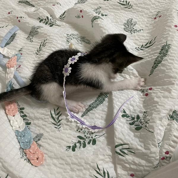 개달당 동백꽃 낚시대 고양이 끈 장난감 카샤카샤 리필 (색상랜덤