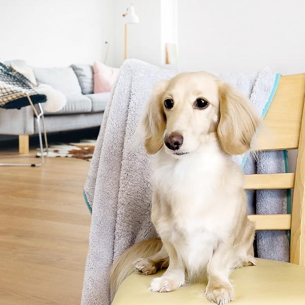 퓨어테일 코지타올 - 강아지 고양이 전용 프리미엄 초극세사 펫타올M